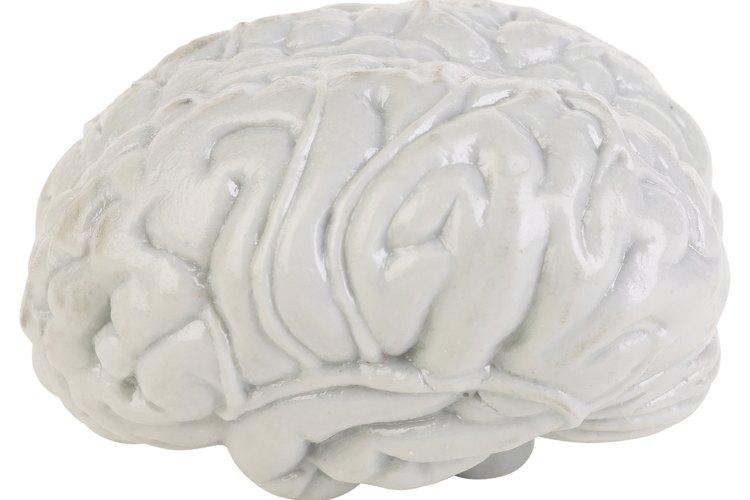 Las actividades de neurociencia amigables para los niños ayudan a los niños a entender el cerebro y el sistema nervioso.