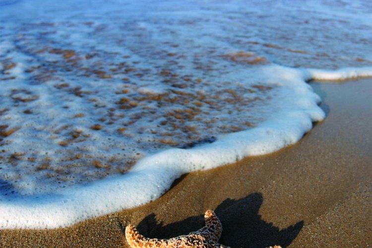 Esta playa alberga a cientos de estrellas de mar.