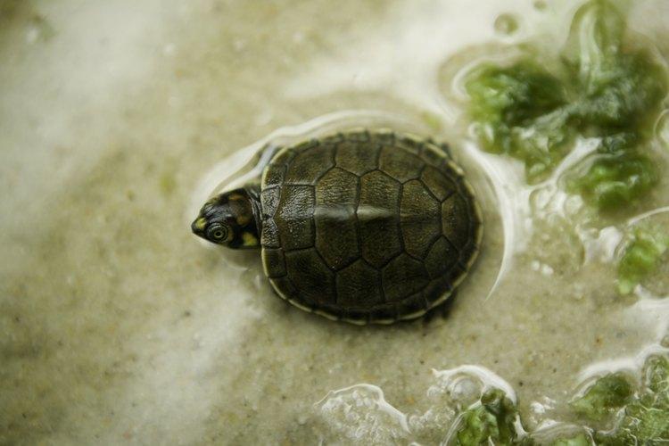 C mo construir un estanque interior para tortugas for Estanques pequenos para tortugas
