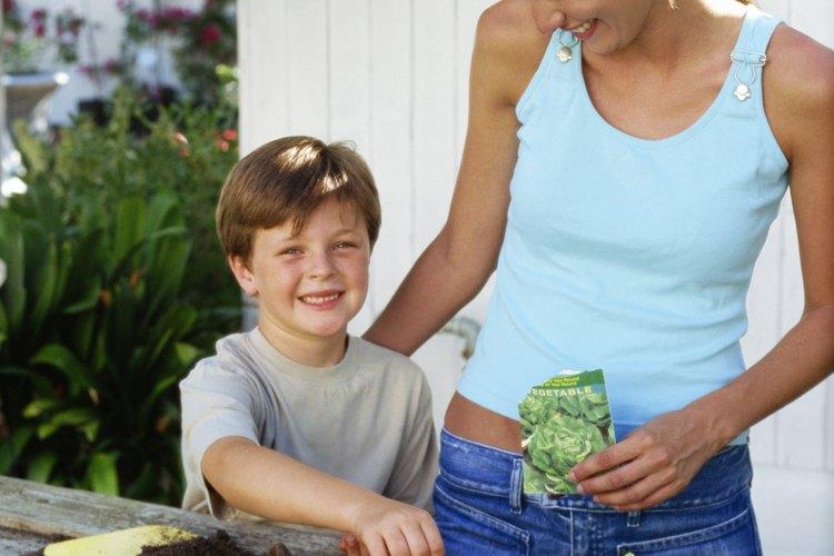 Las semillas de sandía triploides sin semillas germinan poco confiables y lo mejor es iniciar en interiores en un ambiente controlado.