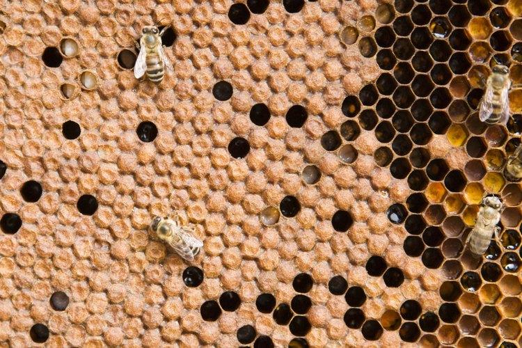 La miel puede ser utilizada de maneras innovadoras cuando se deshidrata.