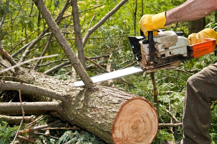 Un molino paga por un leño según el estimado de pies tablares de madera que contiene.