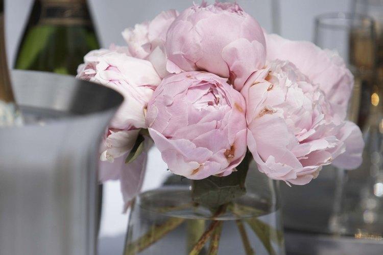 Las peonías son muy utilizadas para los floreros y arreglos.