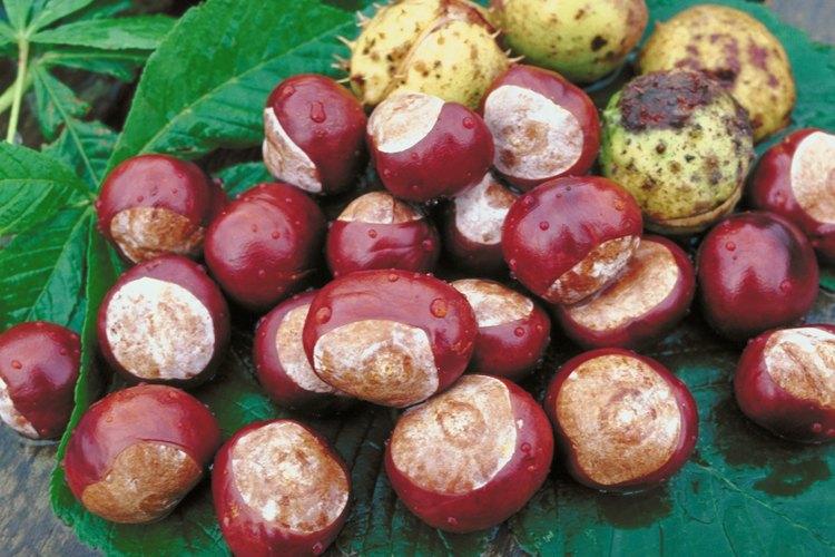 Cultiva árboles de frutos secos a partir de las semillas en el interior de los frutos.