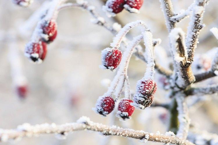 La nieve comprada o casera le da a tu árbol de Navidad un aspecto nevado.