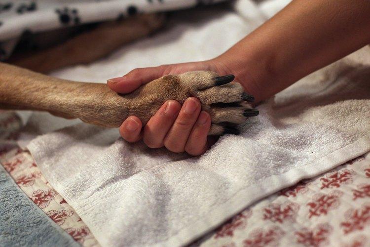 Dale amor y tranquilidad a tu perro para que pueda partir en paz.