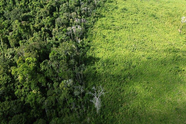Una sección deforestada de la selva del Amazonas se ve cerca de la cuenca cerca de Altamira, Brasil.