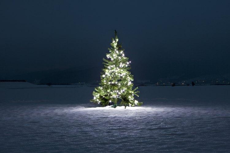 Un árbol de navidad es sólo un elemento básico para poner en una carroza.