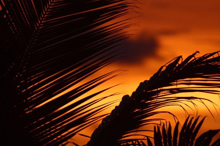 Los bosques tropicales caducifolios, a veces llamados bosques secos, son los bosques tropicales que experimentan una estación húmeda y una seca pronunciadas.