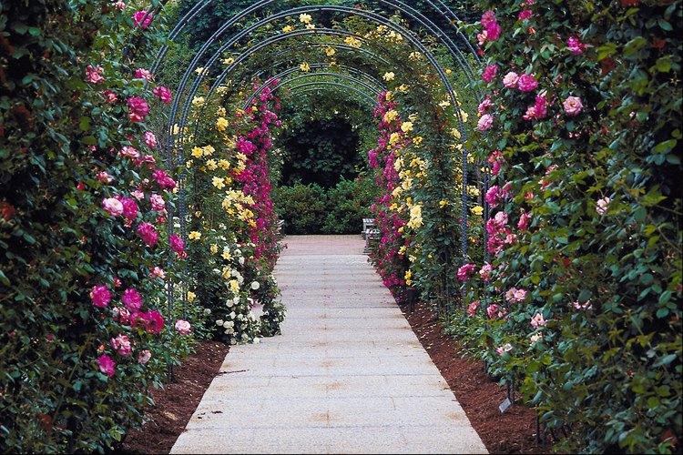 Las mejores plantas trepadoras para p rgolas - Arcos de madera para jardin ...