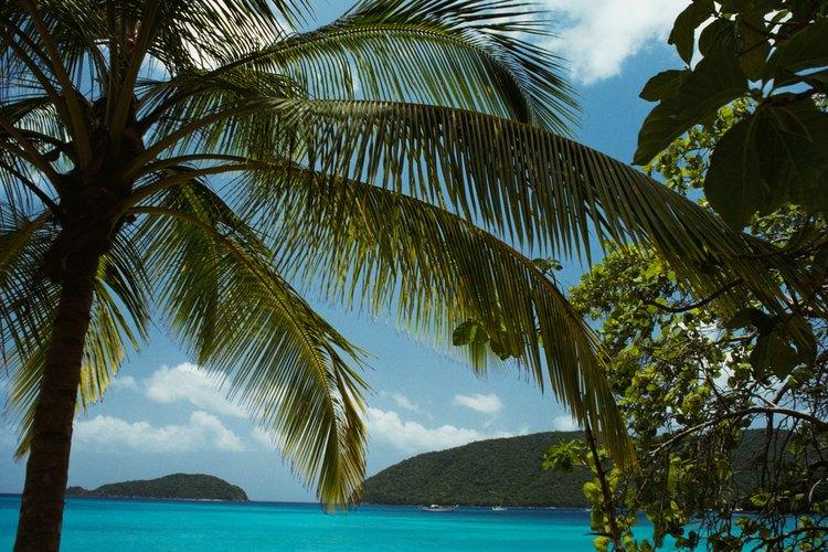 En la idílica playa isleña de Maho Bay, la arena es blanca y el agua es de color turquesa.