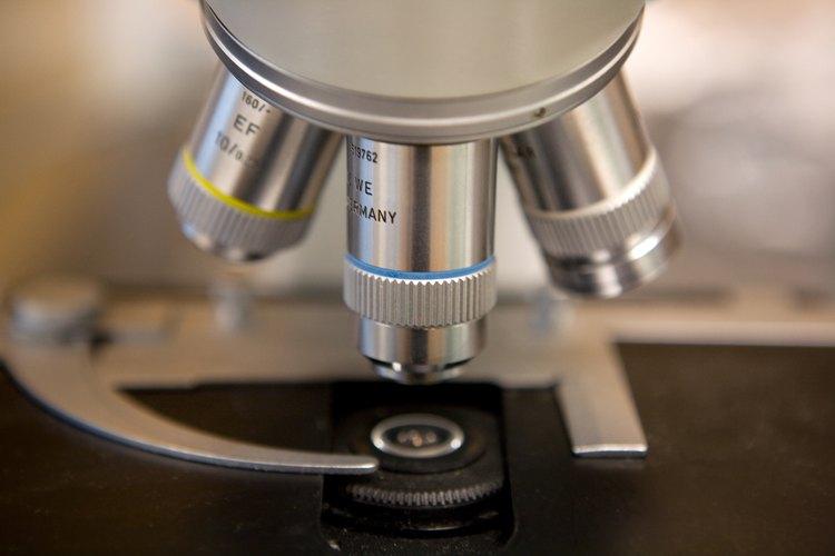 El revólver de un microscopio permite que el usuario cambie los objetivos para ampliar una imagen.