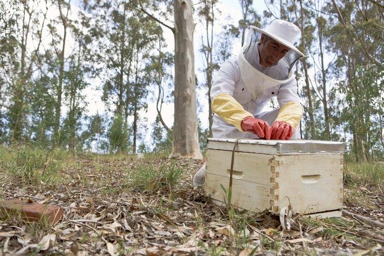 Lleva el equipo de apicultor apropiado.