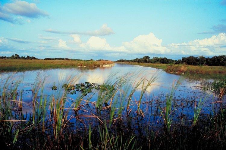 El Everglades National Park sólo incluye una quinta parte del ecosistema de los Everglades.