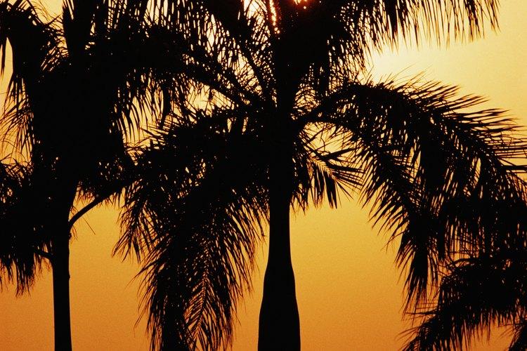 Una vez que se pone el sol, las plantas detienen la fotosíntesis pero se mantienen activas.