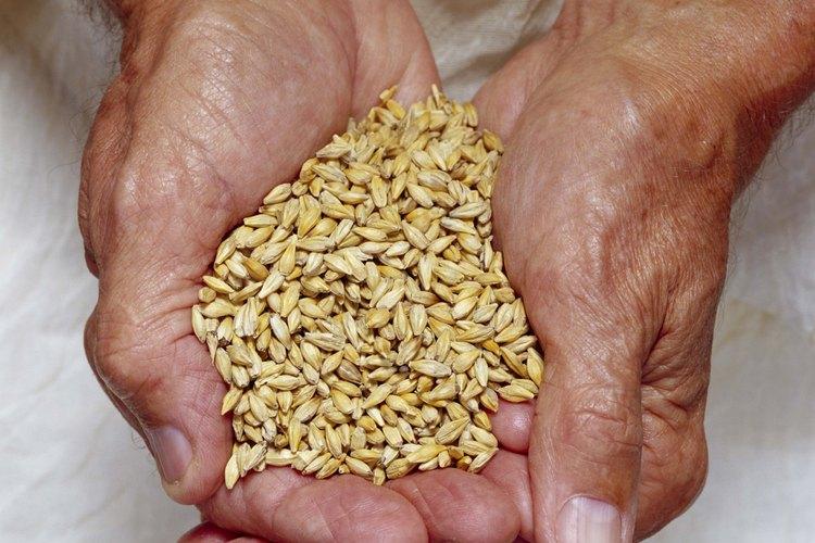 El azúcar de malta se obtiene de la cebada sin descascarar.