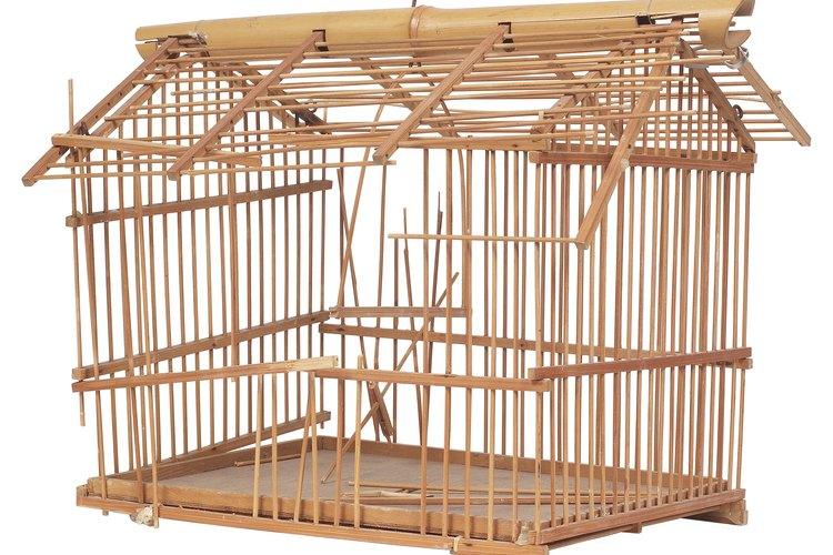 Los diseños de jaulas de pajaros están disponibles en Internet.