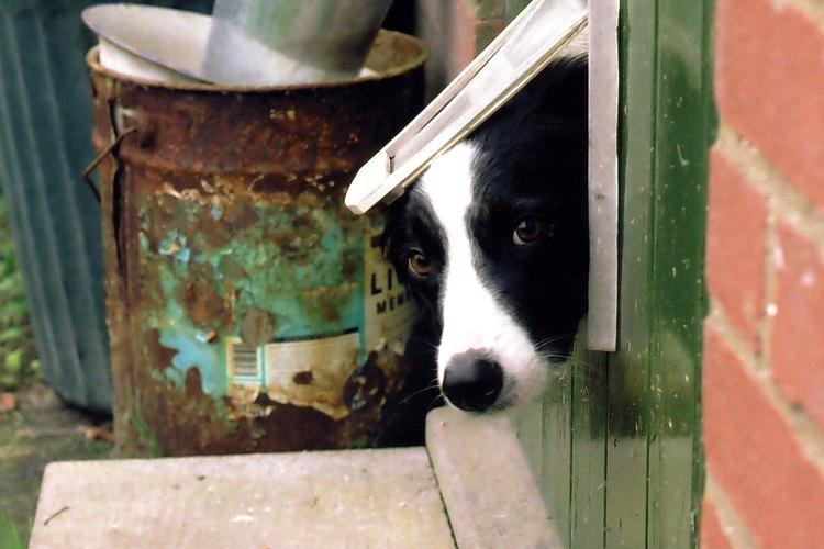 Construye una puerta para que tu perro pueda salir y entrar libremente.