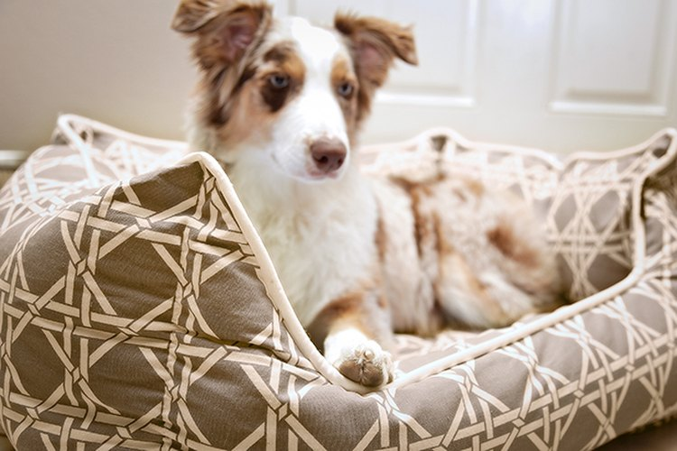 A tu perro le encantará dormir en su cama cómoda y elegante.