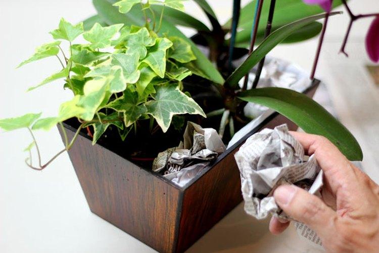 Rellena el recipiente con papel periódico.