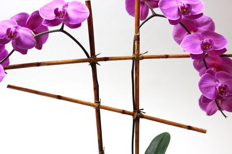Crea un andamio de bambú.