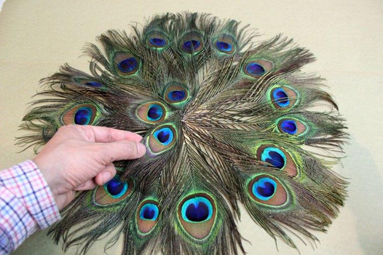 Cubre el centro con plumas adicionales.