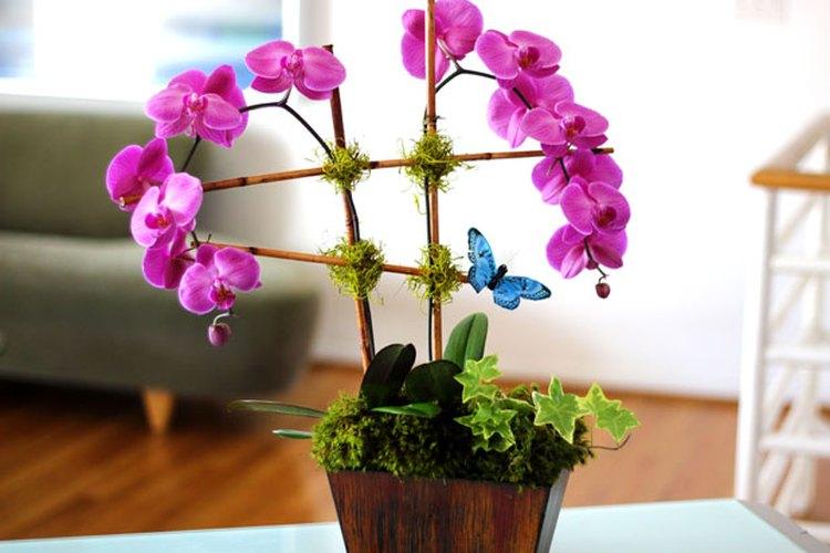 Un arreglo floral con una orquídea que puedes hacer por tu cuenta.