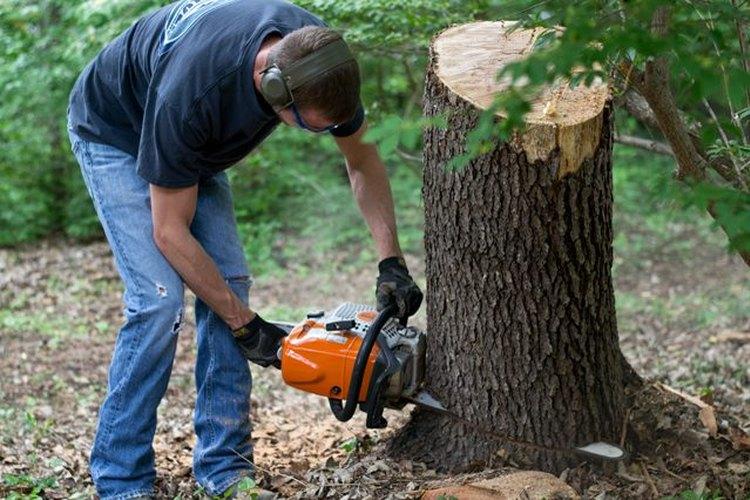Corta el tronco del árbol.