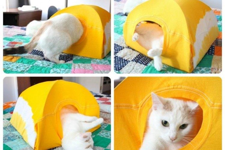 Constrúyele un nuevo hogar a tu gatito.
