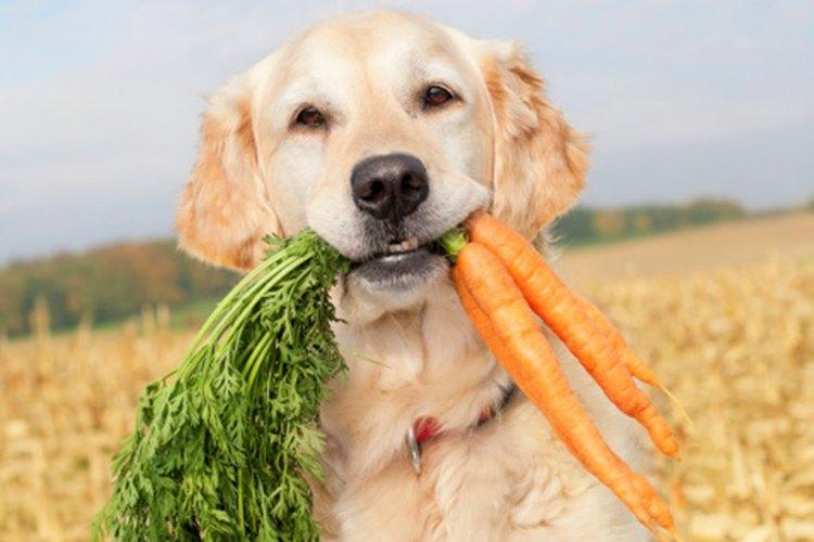 Ofrecerle zanahorias baby es una buena opción, baja en calorías.