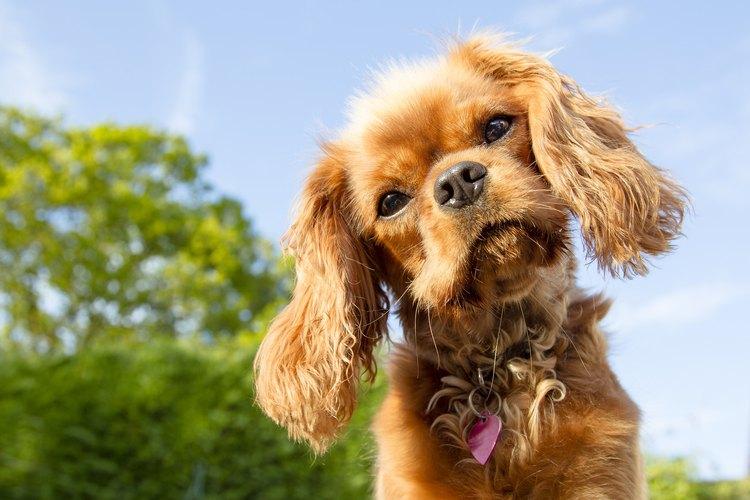 Un animal puede tener un lapso momentáneo en que atraviese una crisis emocional.
