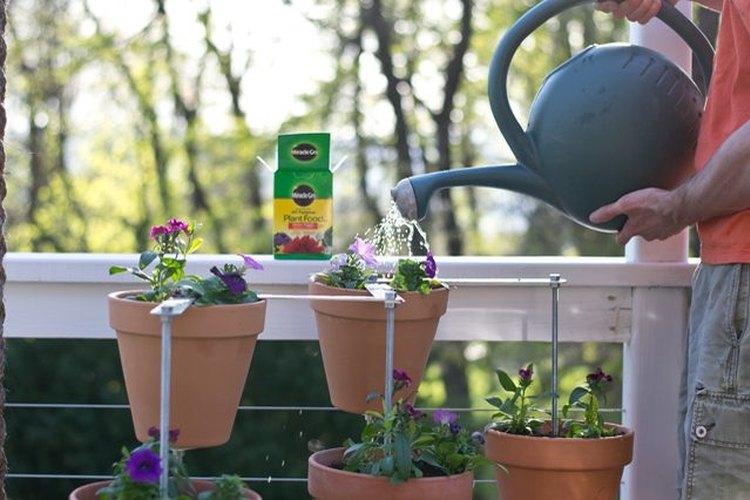 Riega y alimenta las plantas regularmente.