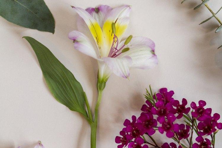 Elige 2 o 3 tipos de flores para tu arreglo.