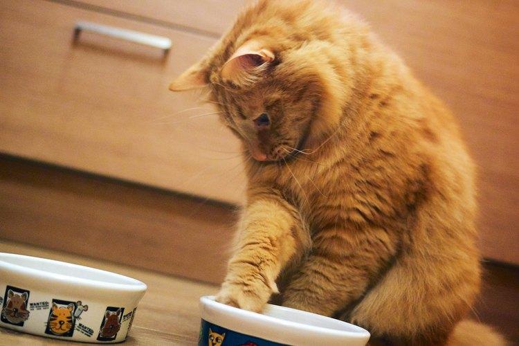 Cuando sales por las mañanas de tu casa, es importante asegurarte de que tu gato tenga alimento para lo que dure el día.