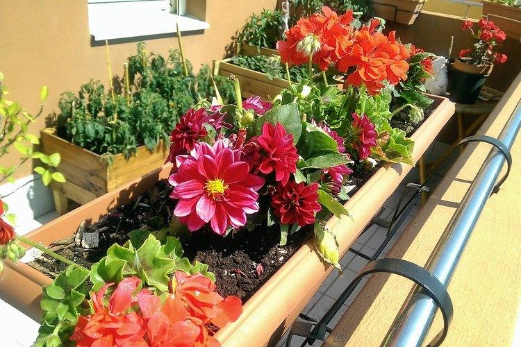 Hay muchos contenedores posibles para disponer tus plantas.