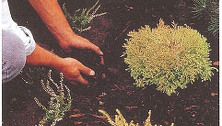 Heathers and conifers make an effective and long-lasting planting bed.