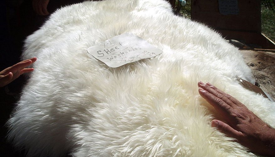 Tanned sheepskins can be sold for a considerable profit.