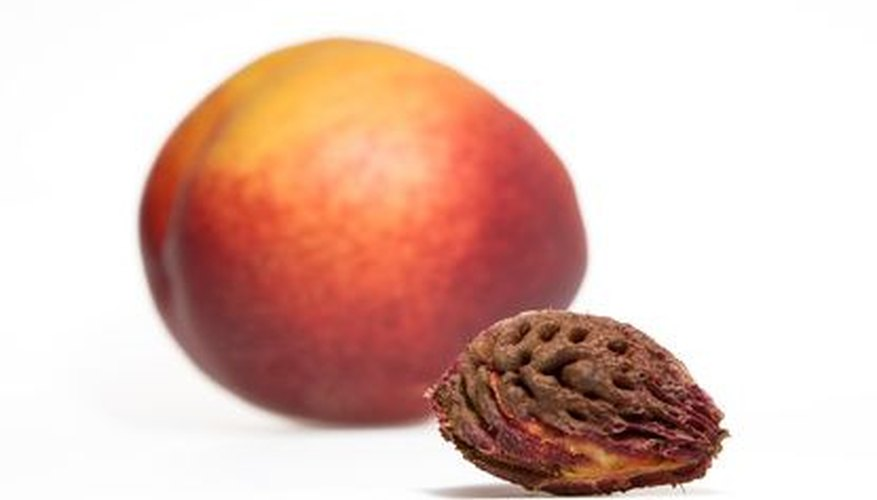 A nectarine and pit.