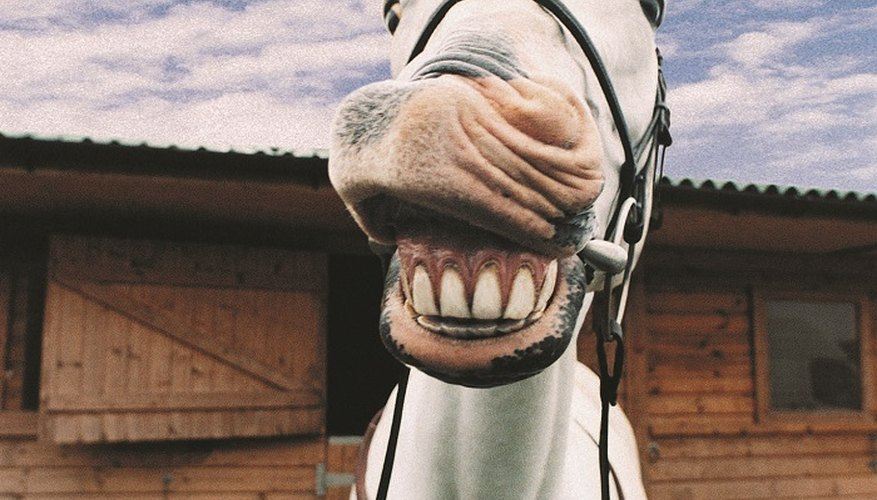 Keep fleas off horses with vinegar.