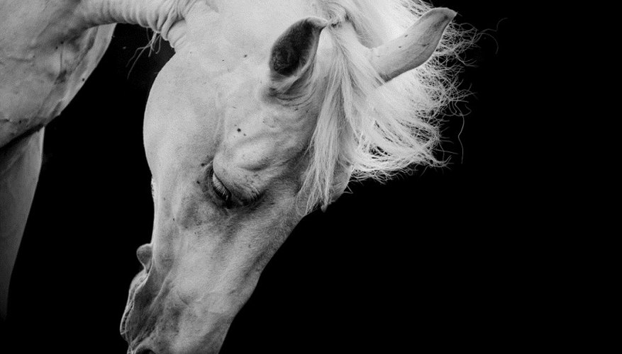 Calcuate horse speed over a particular distance.