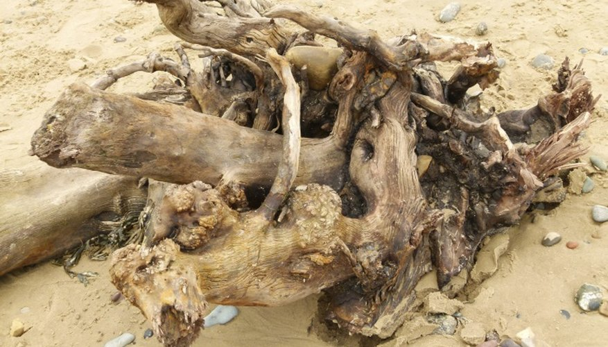 Driftwood makes beautiful home decor inside or outside.