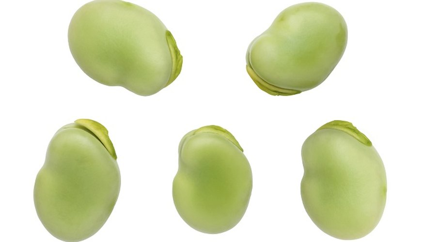 Broad beans are a nutritious food.