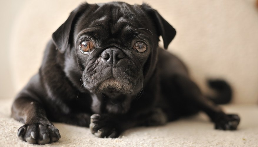 Medicam can cause serious side effects in your epileptic dog.