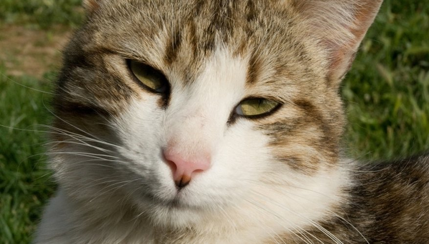 Cat urine can cause brown stains in your lawn.
