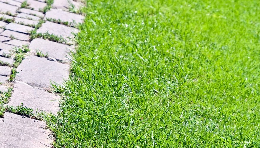 A brick edge can help define your lawn and maintain a manicured appearance.