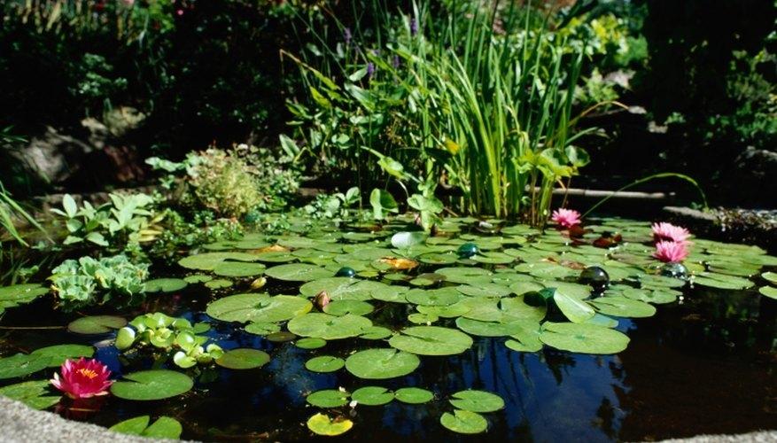 Find pond leaks easily using dye.