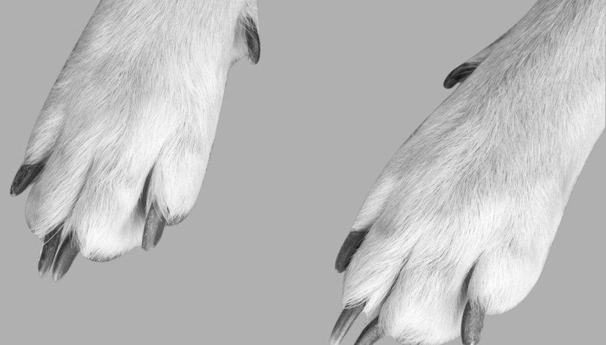 Preserve your pet's paw prints with plaster of Paris.