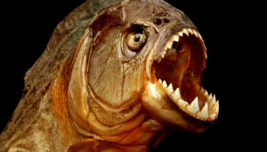 Demonstrate the horror of a piranha attack with this homemade costume.