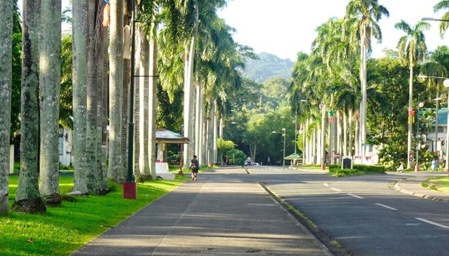 Road between green trees during daytime.jpg