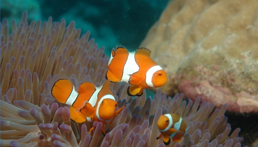 Coral reefs are an important medical resource.